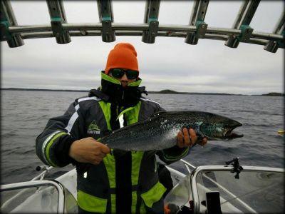 Markus Häyrynen ja Saimaan järvilohi 70cm. (vapautettu kuvauksen jälkeen)